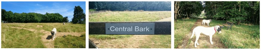 CentralBarkTryptich