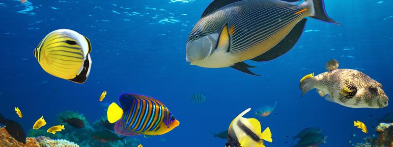 kernock_aquarium_fish