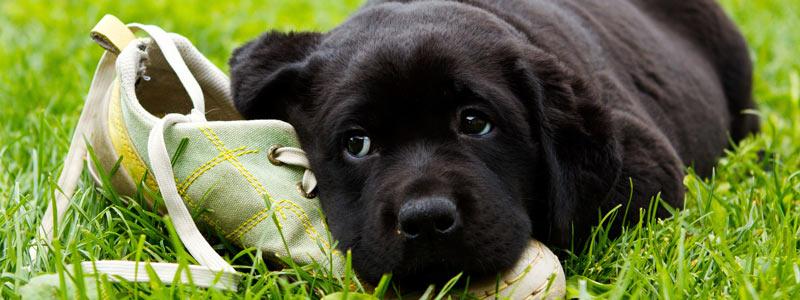 kernock_dogs